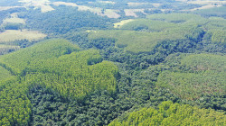 Preservation of native forest in Brazil