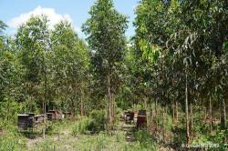 Amazonia deforestation and industrial plantation