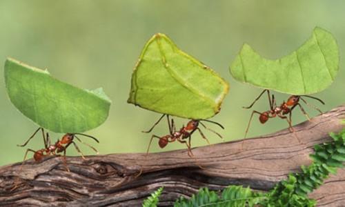 Controle de formigas