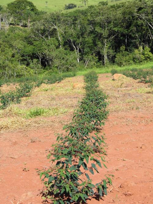 Plantation 1 mois - Janv 2014